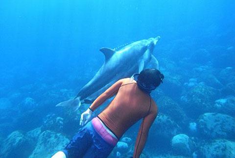 イルカと遊ぼう・ドルフィンコース