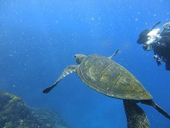 10月八丈島黒潮ツアーのご案内